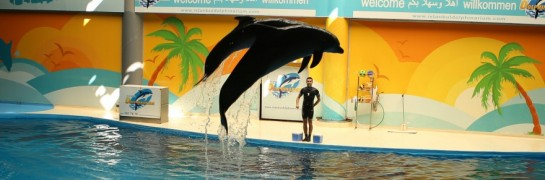 Marriage Proposal at the Dolphin Show in İzmir