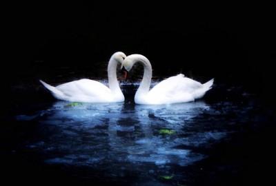 Kuğulu Park'ta Romantik Evlilik Teklifi - 2230