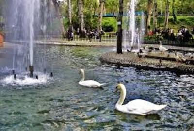 Kuğulu Park'ta Romantik Evlilik Teklifi - 2234