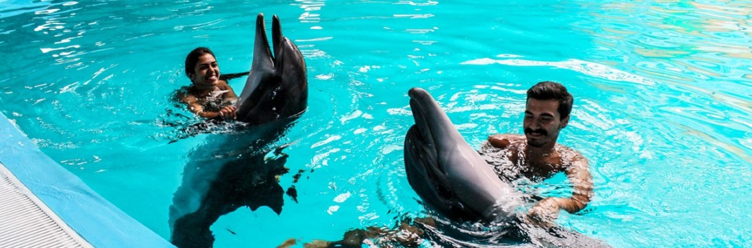 Surprise Marriage Proposal with Dolphins