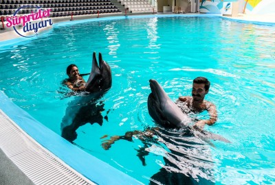 Private Swim with Dolphins and Surprise Marriage Proposal Çağlayan & Yeşim - 425